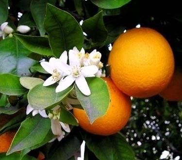 Arancio-20