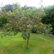 Benessere e salute: il melone a tavola