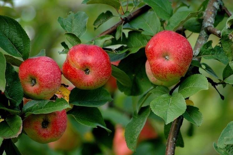 Caratteristiche e proprietà nutritive del melone
