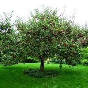 Domanda : albicocco e melo