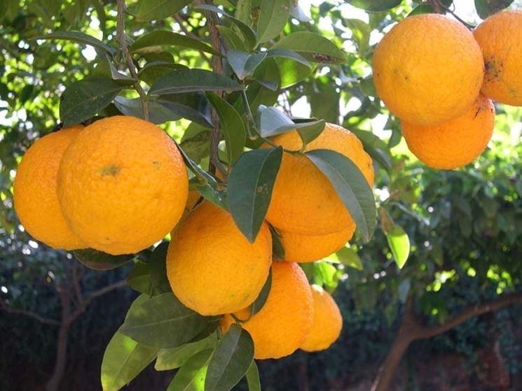 Domanda : Arancio