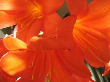 bouquet per amore
