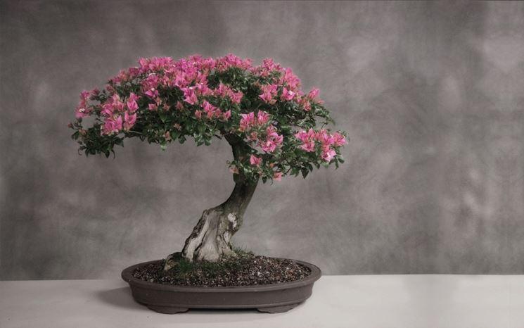 Risposta : bonsai e altro fiore