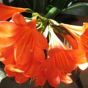 bouquet per anniversari