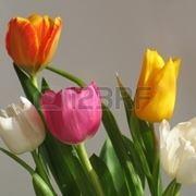 bouquet per aziendali