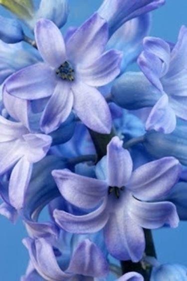 bouquet per fidanzamento