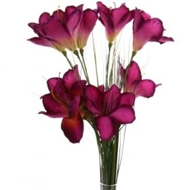 bouquet per natale buon anno