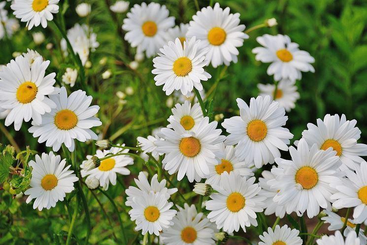 Suggerimenti e consigli per la cura dei fiori