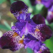 consegna fiori Altamura