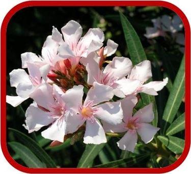 consegna fiori per condoglianze