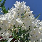 consegna fiori per lutto-1
