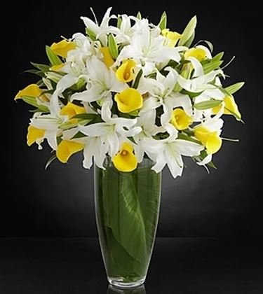 fiori Afragola
