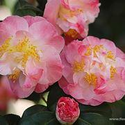 fiori per amore