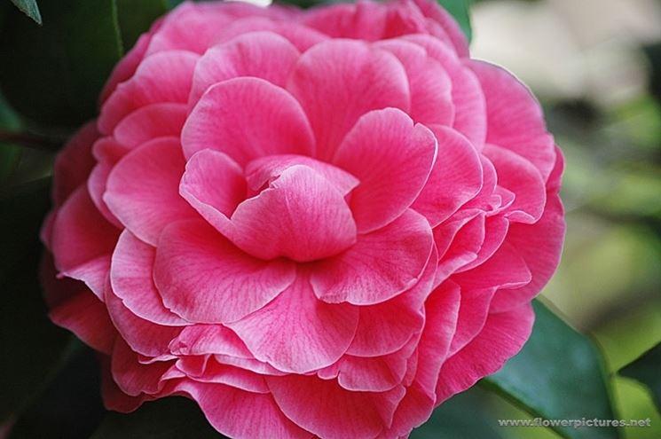 fiori per anniversari-1