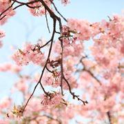 fiori per auguri