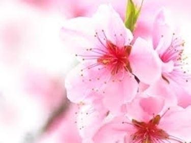 fiori per battesimo-1