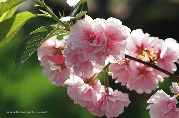 fiori per condoglianze-1