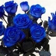 fiori per onomastico