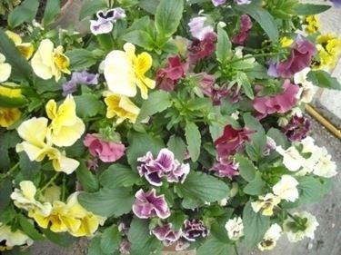 fiori per regalo