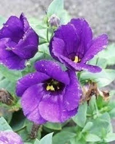 spedire fiori-16