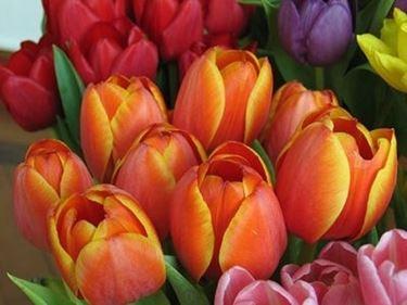 Composizione fiori-8