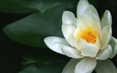 Un fiore, molteplici significati