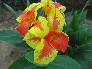 Composizione fiori-21