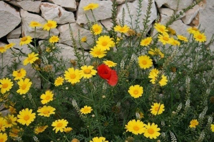 inviare fiori-14