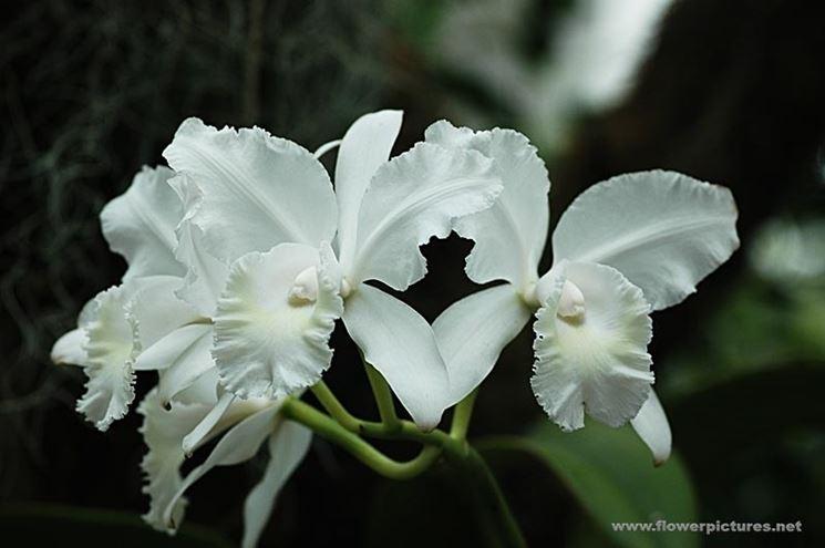 invio fiori per lutto