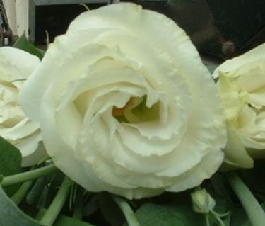 invio fiori per nozze argento-oro-1