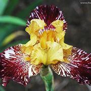 invio fiori Siracusa