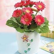 fiori per battesimo
