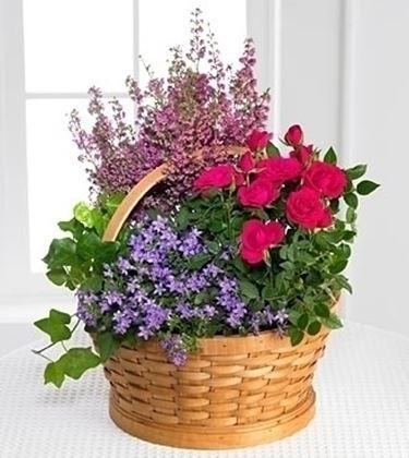 inviare fiori a Bologna