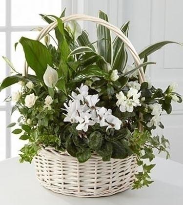inviare fiori a Firenze