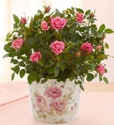 inviare fiori a Milano