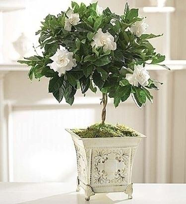 inviare fiori Ragusa