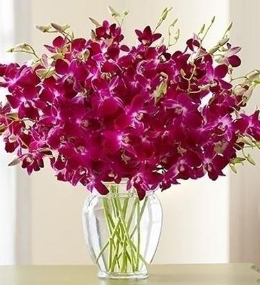 invio fiori per mi dispiace