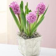 invio fiori per natale buon anno