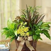 Napoli fiori