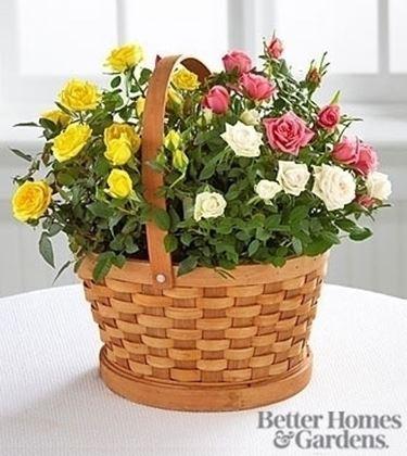 spedire fiori a Bologna