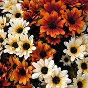 consegna fiori per lutto