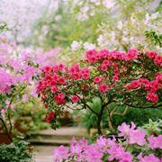 alberi con fiori