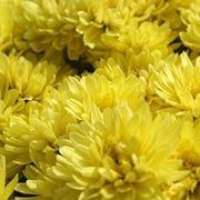 bouquet per lutto-2