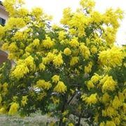 Composizione di gerbere, mimosa e gladioli