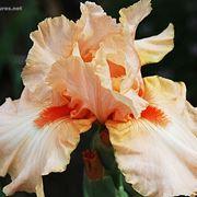 fiori per onomastico-2