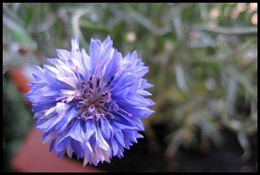 mazzi fiori di campo-1