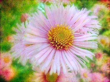 fiori festa dei nonni-4