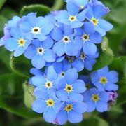 fiori festa dei nonni-5
