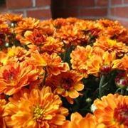 fiori festa della mamma-3