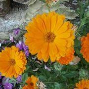 fiori festa della mamma-4